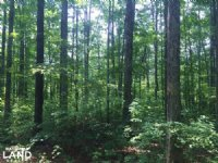 13.5 Acres Of Timberland & Home Sit