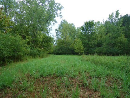 38 Acres Awesome Hunting $59,900 : Dry Branch : Twiggs County : Georgia