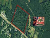 49.58 Acres Hunting Land, Timber
