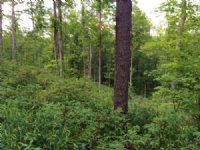 150 Acres Timberland Borders Forest