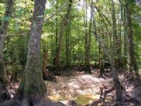 Little Mulberry Creek