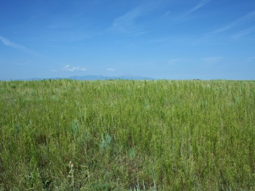 Peaceful 80 Acres In Ellicott : Ellicott : El Paso County : Colorado