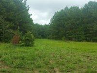 153+/- Acres Timberland & Cropland
