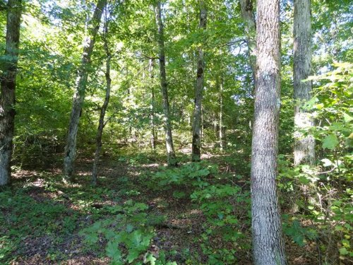 80 Acre Secluded Recreational Tract : Pleasant Plains : Independence County : Arkansas