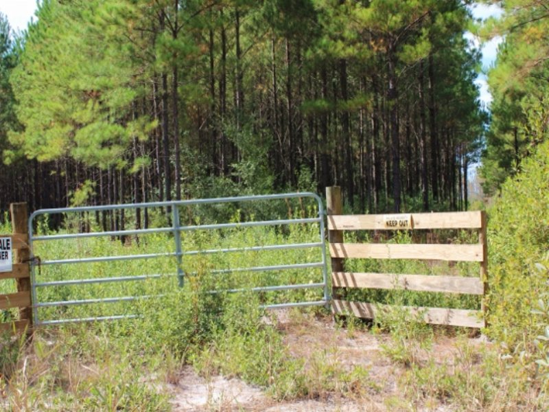 100 Acres To Hunt Or Live : Waycross : Ware County : Georgia