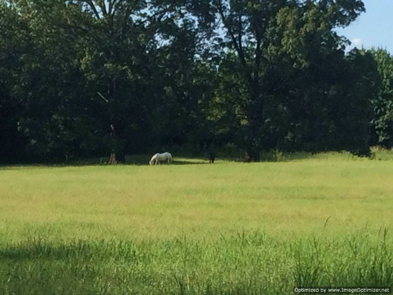 80+/- Ac Horse Property : Farm for Sale : Flora : Madison ...