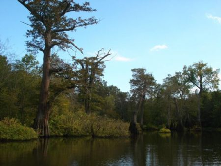Duck Lodge And Flooded Green Timber : Connells Point : Monroe County : Arkansas