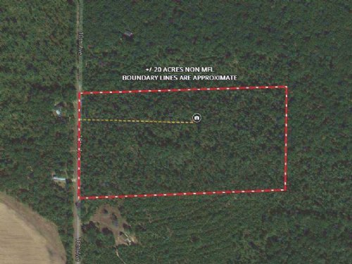 20 Acres Hunting / Buildable Land : Adams : Wisconsin
