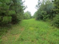 139.00 Acres Hunting Land, Timber
