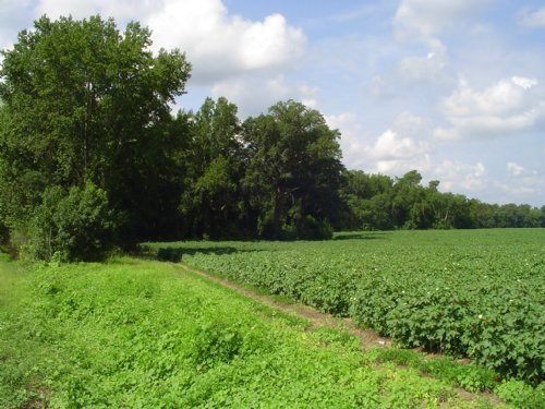 Blewer Tract 1 : Orangeburg County : South Carolina