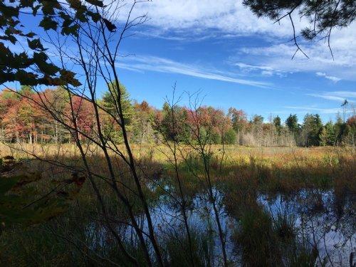 Tug Hill Hunting Land With Pond : Amboy : Oswego County : New York