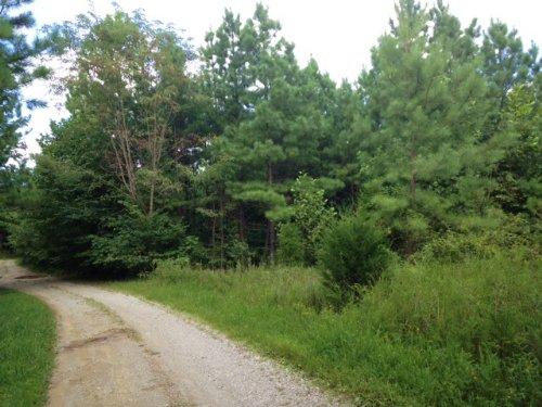 Rosson 98 Acres : Hardyville : Hart County : Kentucky
