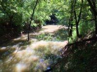 82.41 +/- Wooded Acres, With Creek : Fairmount : Gordon County : Georgia