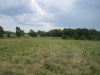 40 Acres Of Pasture Land