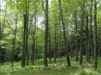 341+/- Acres Of Land, Timber