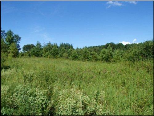 70 Acres In Neshoba County : Philadelphia : Neshoba County : Mississippi
