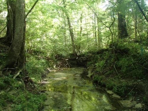 107 Acres In Oktibbeha County : Starkville : Oktibbeha County : Mississippi