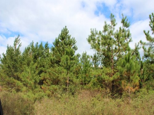 40 Acres For Hunting : Perry : Taylor County : Florida