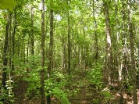Reduced 110 Acres Brier Creek : Keysville : Burke County : Georgia