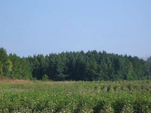 27± Acres : Canton : Madison County : Mississippi