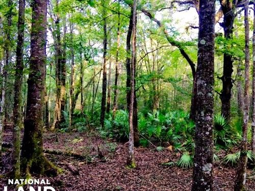 Tallahassee Timber And Hunting Land : Tallahassee : Leon County : Florida