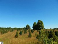 40 Acre Hunting And Farming Parcel