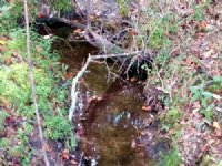 112 Acres Hunting Tract With Creek