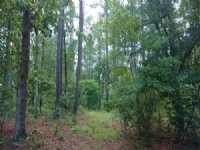 8.5 Ac South Island Road : Georgetown : Georgetown County : South Carolina
