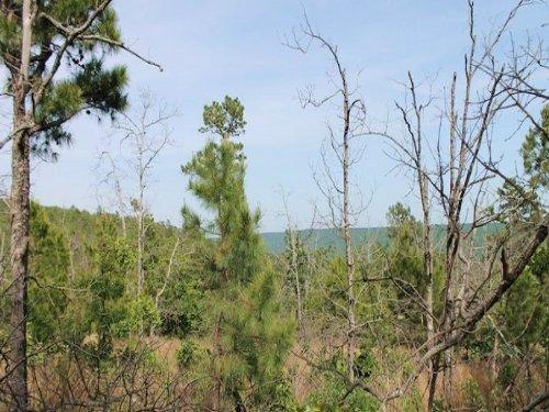 7.58 Acres Indian Ridge Ii : Daisy : Pittsburg County : Oklahoma