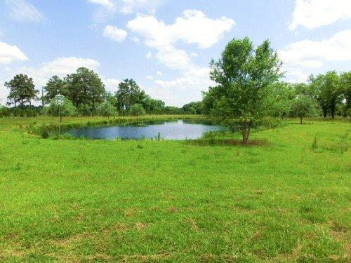230 Acres Of Hunters Paradise : Cordele : Crisp County : Georgia