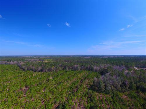 53 Acre Pine Plantation : Waynesville : Brantley County : Georgia