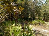 7 Acres, Well & Septic, $267/month
