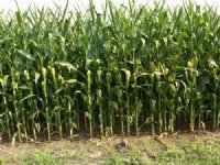 Rowcrop Farm For Sale : Roxton : Lamar County : Texas