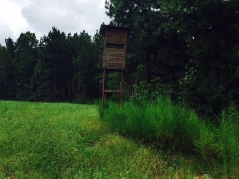 130 Acres Wall Street Road Amite Co : Liberty : Amite County : Mississippi