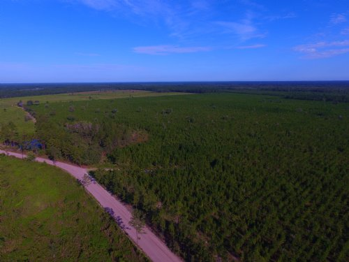 144 Acre Investment And Hunting : Pembroke : Bryan County : Georgia