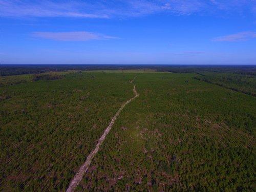 145 Acre Pine Plantation : Pembroke : Bryan County : Georgia