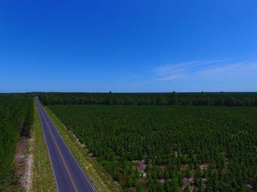 146 Acre Pine Plantation : Waynesville : Brantley County : Georgia