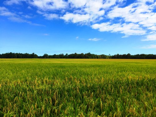 109.5 Acre Farm With Irrigated Crop : Holly Grove : Monroe County : Arkansas