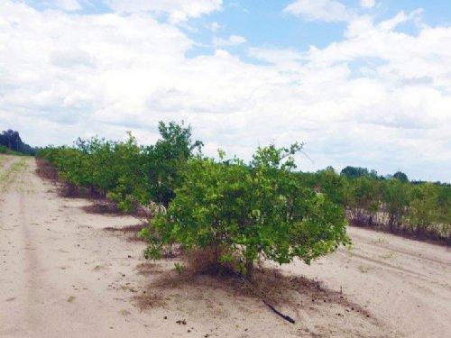 Lake Lowery Investment : Lake Alfred : Polk County : Florida