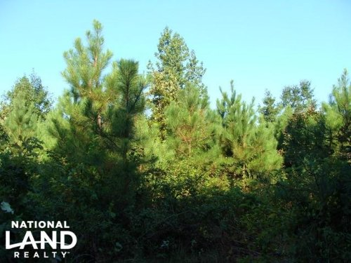 40+/- Acre Cut-Over Timberland : Rison : Cleveland County : Arkansas
