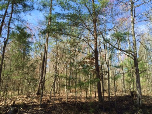 13.748 +/- Mixed Wooded Acres : Adairsville : Bartow County : Georgia