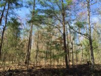 13.748 +/- Mixed Wooded Acres