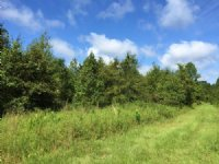 Recreational, Vacant, Farm Land : Lake City : Columbia County : Florida