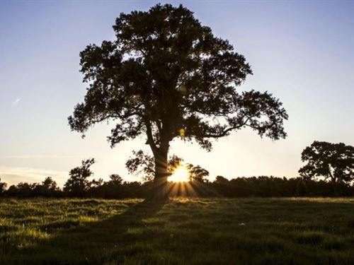Jb Ranch : Montgomery : Texas