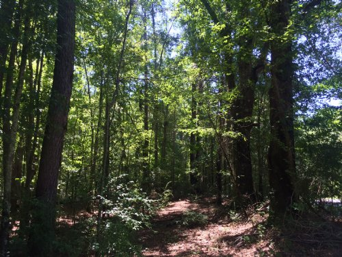 Hall Mt Ida Tract : Brantley : Crenshaw County : Alabama