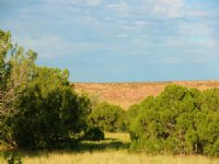 38 Acre Mountain Ranches $260 Mo : St. Johns : Apache County : Arizona