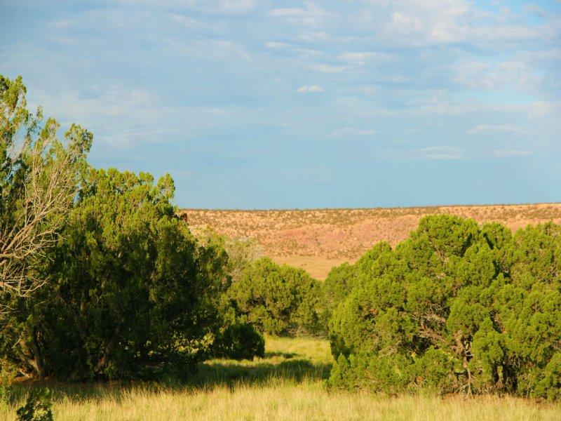 38 Acre Mountain Ranches $260 Mo : St. Johns : Apache County : Arizona