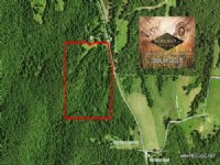 34.75 Acres Hunting Land, Timber