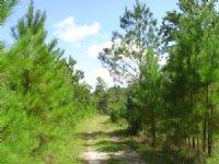 Sand Hill Tract : Guyton : Effingham County : Georgia