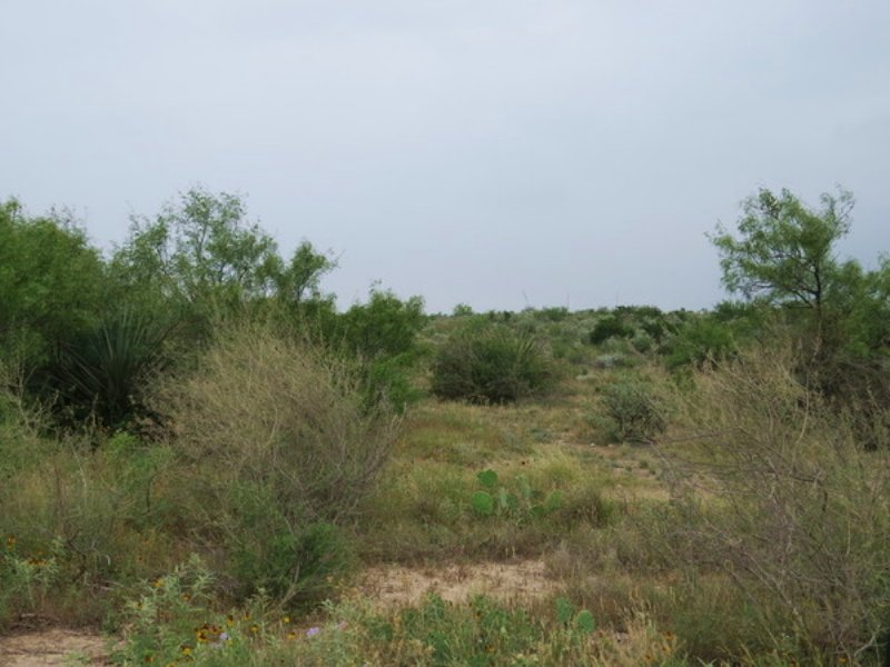 Wolf Springs 51 : Comstock : Val Verde County : Texas